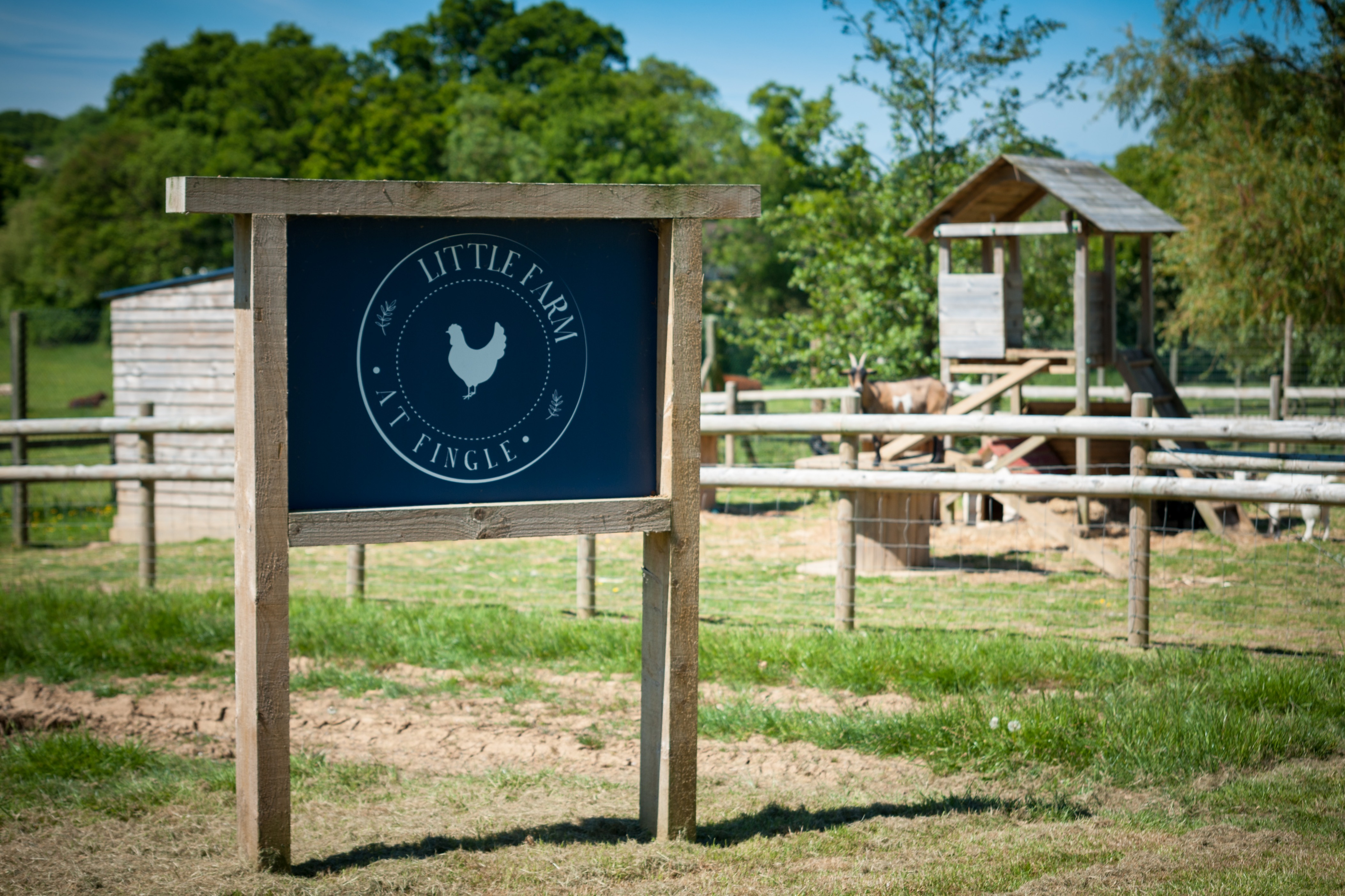 Come and feed the animals at Little Farm